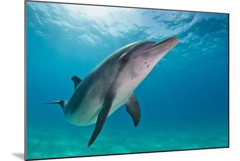 Portrait of an Atlantic Spotted Dolphin Swimming in Clear Water-Jim Abernethy-Mounted Photographic Print