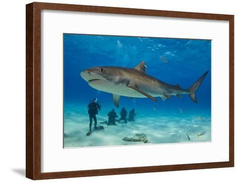 A Tiger Shark Swimming at the Sea Floor Near a Group of Divers-Jim Abernethy-Framed Art Print
