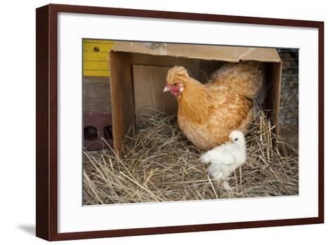 A Chicken and Her Chick Near Denton, Nebraska-Joel Sartore-Framed Art Print