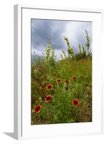 Fire Wheel and Soapweed Yucca Flowers Bloom in the Cather Prairie Reserve-Michael Forsberg-Framed Art Print