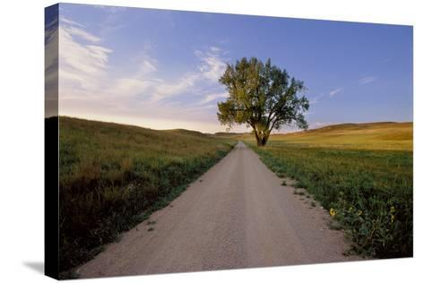 Landscape of a Country Road and Cottonwood Tree-Michael Forsberg-Stretched Canvas Print