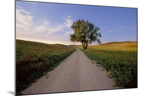 Landscape of a Country Road and Cottonwood Tree-Michael Forsberg-Mounted Photographic Print