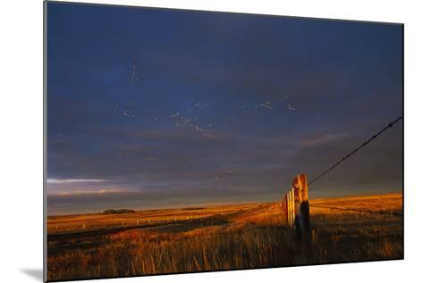 Lesser Snow Geese Fly High Above the Plains-Michael Forsberg-Mounted Photographic Print