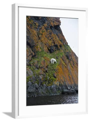 A Polar Bear Descends a Cliff on a Small Island in Search of Little Auks-Andy Mann-Framed Art Print