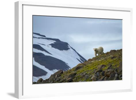 A Polar Bear on a Small Island on the Lookout for Little Auks-Andy Mann-Framed Art Print
