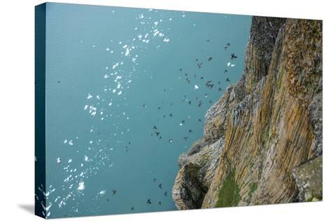 Little Auks Fly by Basalt Columns on Rubini Rock, Hooker Island-Andy Mann-Stretched Canvas Print