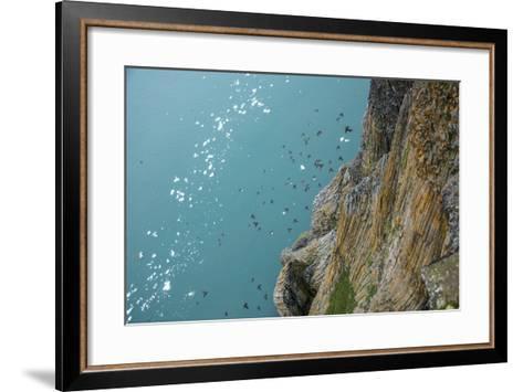 Little Auks Fly by Basalt Columns on Rubini Rock, Hooker Island-Andy Mann-Framed Art Print