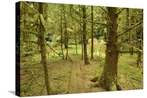 A Boardwalk Trail Through a Moss-Covered Temperate Rainforest-Jonathan Kingston-Stretched Canvas Print