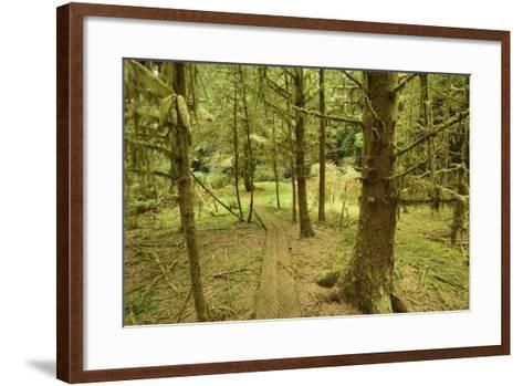 A Boardwalk Trail Through a Moss-Covered Temperate Rainforest-Jonathan Kingston-Framed Art Print