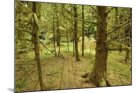 A Boardwalk Trail Through a Moss-Covered Temperate Rainforest-Jonathan Kingston-Mounted Photographic Print