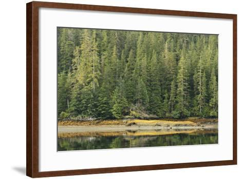 Conifer Trees Reflected in the Calm Waters of Rudyerd Bay-Jonathan Kingston-Framed Art Print