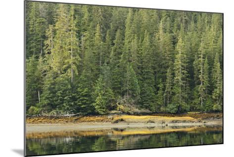 Conifer Trees Reflected in the Calm Waters of Rudyerd Bay-Jonathan Kingston-Mounted Photographic Print