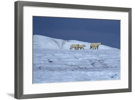 A Polar Bear, Ursus Maritimus, and Her Cubs Walk on the Top of an Ice Shelf-Jay Dickman-Framed Art Print
