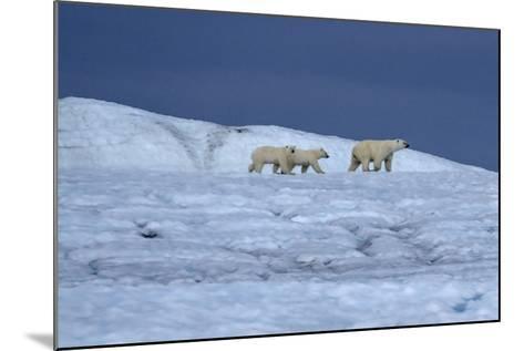 A Polar Bear, Ursus Maritimus, and Her Cubs Walk on the Top of an Ice Shelf-Jay Dickman-Mounted Photographic Print