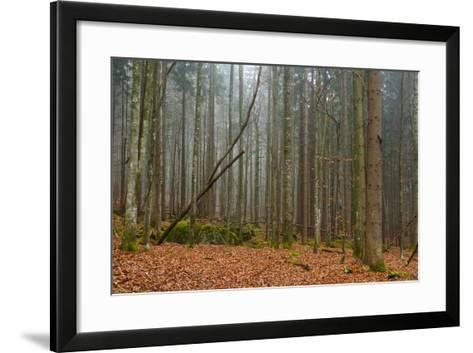 A Foggy Bavarian Forest in Autumn-Sergio Pitamitz-Framed Art Print