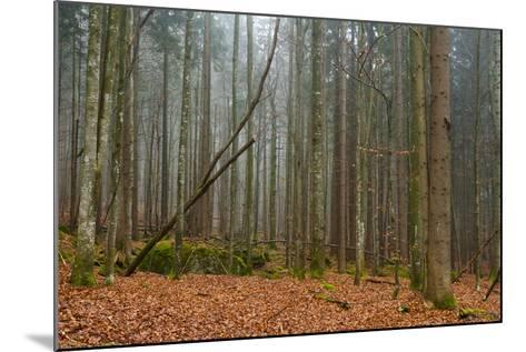 A Foggy Bavarian Forest in Autumn-Sergio Pitamitz-Mounted Photographic Print