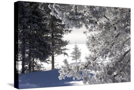 A Scenic Landscape of Snow-Covered Trees and Ground-Robbie George-Stretched Canvas Print
