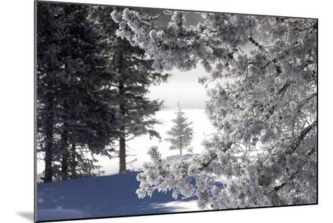 A Scenic Landscape of Snow-Covered Trees and Ground-Robbie George-Mounted Photographic Print