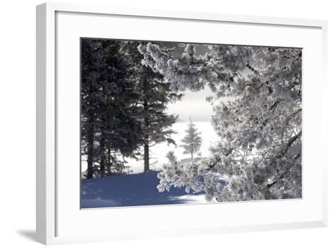 A Scenic Landscape of Snow-Covered Trees and Ground-Robbie George-Framed Art Print