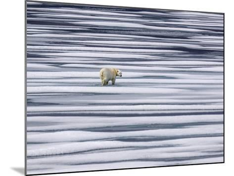 A Polar Bear, Ursus Maritimus, on Ice Floes in the Canadian Archipelago-Jay Dickman-Mounted Photographic Print
