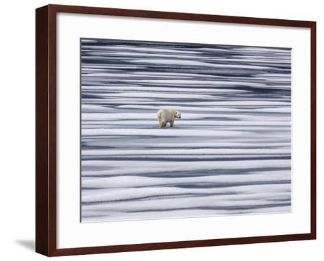 A Polar Bear, Ursus Maritimus, on Ice Floes in the Canadian Archipelago-Jay Dickman-Framed Art Print