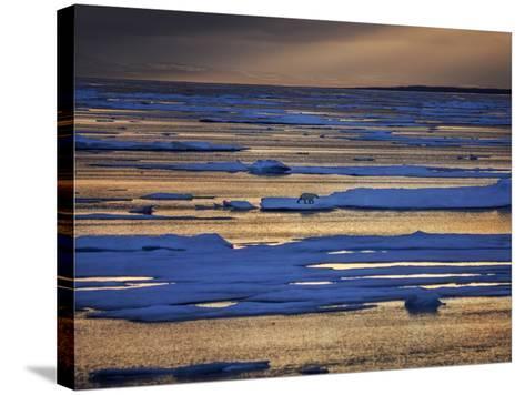 A Polar Bear, Ursus Maritimus, on the Edge of Ice Flow in Davis Strait-Jay Dickman-Stretched Canvas Print