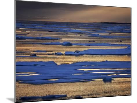 A Polar Bear, Ursus Maritimus, on the Edge of Ice Flow in Davis Strait-Jay Dickman-Mounted Photographic Print