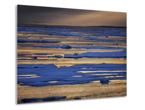 A Polar Bear, Ursus Maritimus, on the Edge of Ice Flow in Davis Strait-Jay Dickman-Metal Print