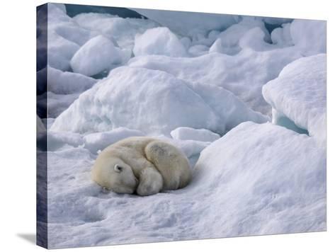 A Polar Bear, Ursus Maritimus, Sleeping on Ice in Davis Strait-Jay Dickman-Stretched Canvas Print