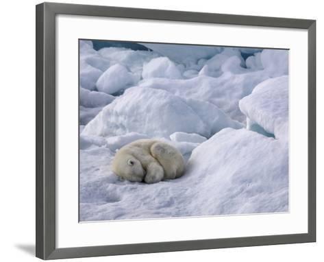 A Polar Bear, Ursus Maritimus, Sleeping on Ice in Davis Strait-Jay Dickman-Framed Art Print