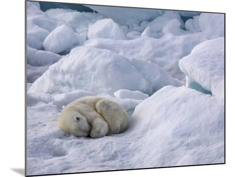 A Polar Bear, Ursus Maritimus, Sleeping on Ice in Davis Strait-Jay Dickman-Mounted Photographic Print