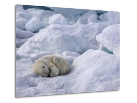 A Polar Bear, Ursus Maritimus, Sleeping on Ice in Davis Strait-Jay Dickman-Metal Print