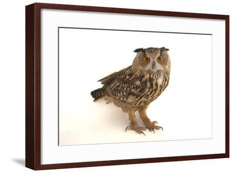 A Spanish Eagle Owl, Bubo Bubo Hispanus, at the Palm Beach Zoo and Conservation Society-Joel Sartore-Framed Art Print
