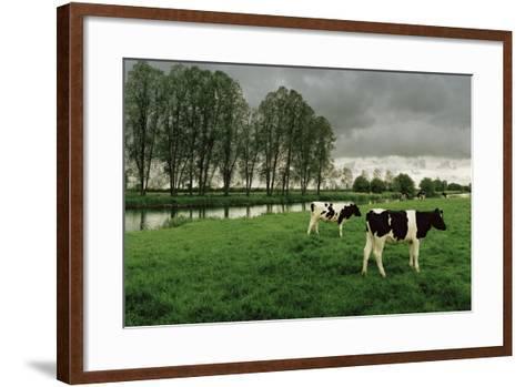 Cattle on Thames Path Below Radcot Bridge-Macduff Everton-Framed Art Print