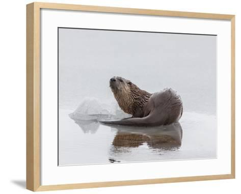 A Northern River Otter Looks Up from Icy Waters-Tom Murphy-Framed Art Print