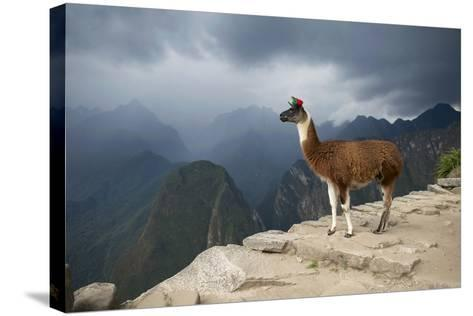 A Llama Stands on a Terrace High in the Andes-Jim Richardson-Stretched Canvas Print