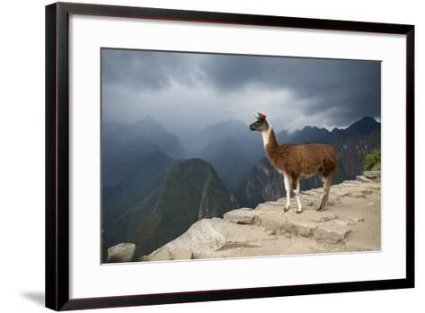 A Llama Stands on a Terrace High in the Andes-Jim Richardson-Framed Art Print