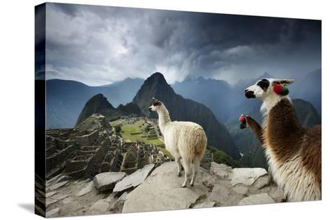 Llamas Overlook the Pre-Columbian Inca Ruins of Machu Picchu-Jim Richardson-Stretched Canvas Print