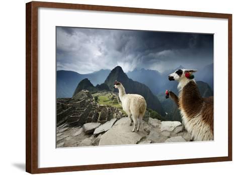 Llamas Overlook the Pre-Columbian Inca Ruins of Machu Picchu-Jim Richardson-Framed Art Print
