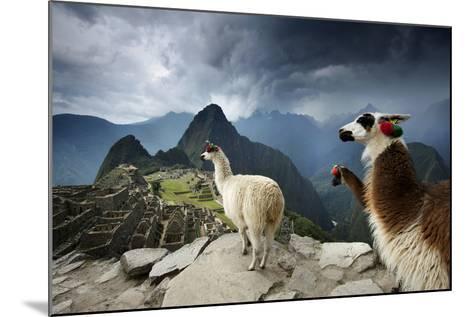 Llamas Overlook the Pre-Columbian Inca Ruins of Machu Picchu-Jim Richardson-Mounted Photographic Print