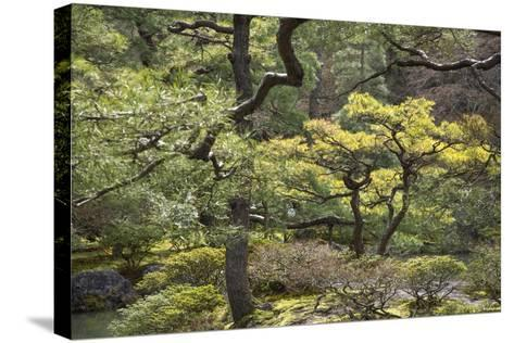 Trees and Shrubs at the Well Tended Japanese Garden at Ginkaku-Ji-Macduff Everton-Stretched Canvas Print