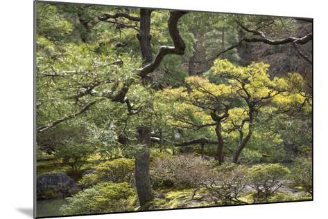 Trees and Shrubs at the Well Tended Japanese Garden at Ginkaku-Ji-Macduff Everton-Mounted Photographic Print