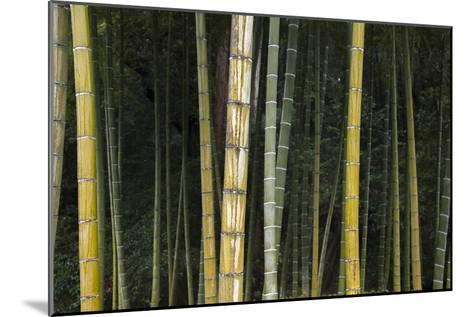 A Bamboo Forest in Koinzan Saihoji, Popularly known as Kokedera or Moss Temple-Macduff Everton-Mounted Photographic Print