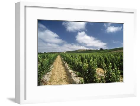 A Vineyard in Santa Ynez-Macduff Everton-Framed Art Print