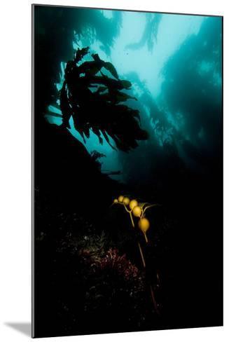 A Kelp Stem-Cesare Naldi-Mounted Photographic Print