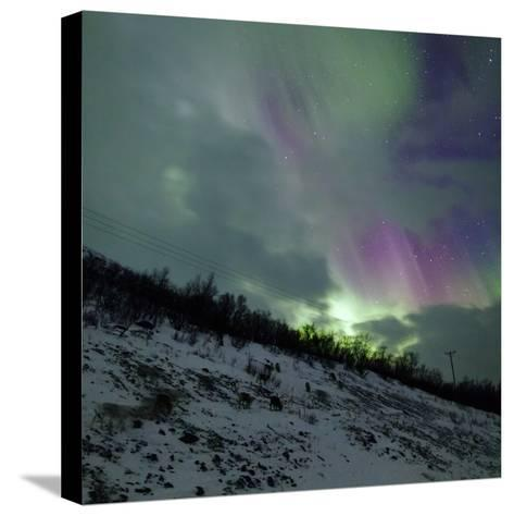 Aurora Borealis Above Reindeer in a Snow-Covered Winter Landscape-Babak Tafreshi-Stretched Canvas Print
