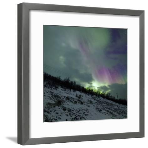 Aurora Borealis Above Reindeer in a Snow-Covered Winter Landscape-Babak Tafreshi-Framed Art Print