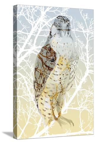 Peregrine Falcon, 2015-Nancy Moniz Charalambous-Stretched Canvas Print