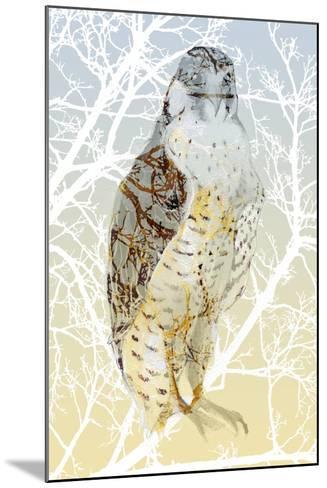 Peregrine Falcon, 2015-Nancy Moniz Charalambous-Mounted Giclee Print