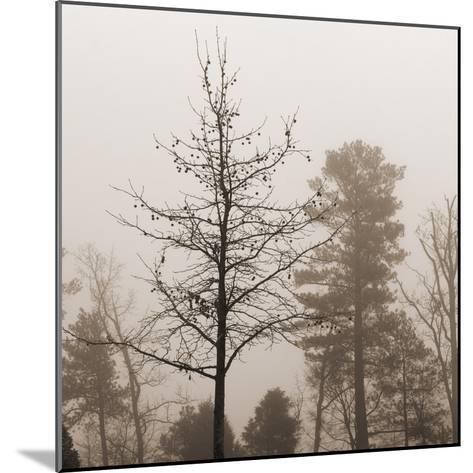 Evening Mist 1 Detail-Marlana Semenza-Mounted Art Print